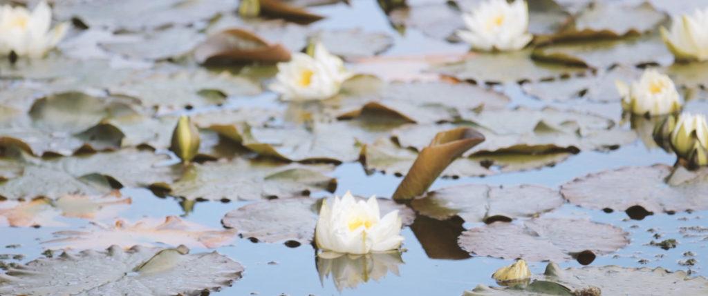Drumtochty Castle Wedding water lilies